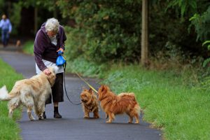 An older caucasian eoman walking with 3 leashed dogs in the park.