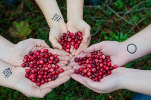 3 sets of caucasian hands holding a handful of cranberries
