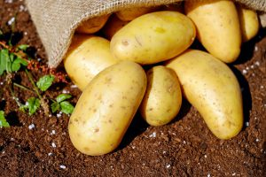 Bag of potatoes over dirt on the ground