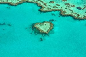 overview of coral reefs in water, with one bunch shaped like a heart.