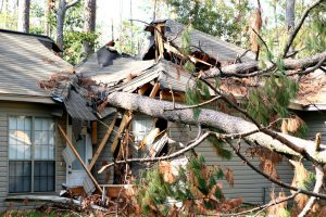 tree fallen over a house's roof.