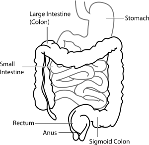 diagram of intestine labeled