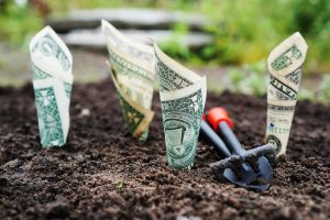 dollar bills in the ground growing