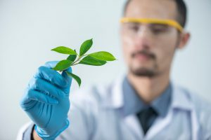 caucasian man in a lab coat looking at a leaf