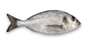 a gray medium sized fish laying on a table