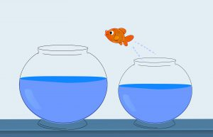 orange fish jumping out of a small bowl into a larger one